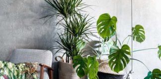 Decoração com plantas