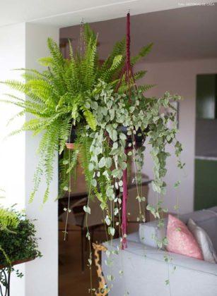 Decoração com plantas para sala