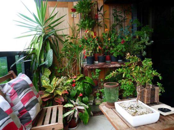 Decoração com plantas para varanda