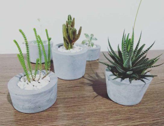 Decoração com plantas suculentas
