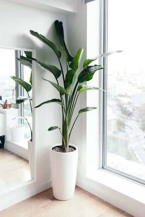 Plantas ornamentais flores e rvores para jardim sol for Plantas decorativas hidroponicas