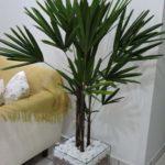 Decorações com plantas ornamentais na sala