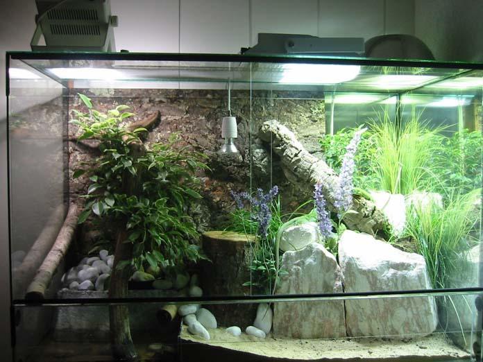 Terrário Para iguanas