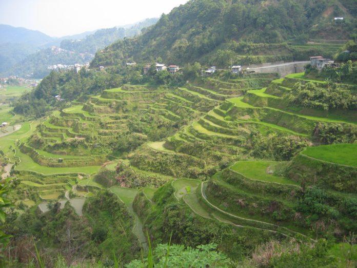 arrozais nas filipinas