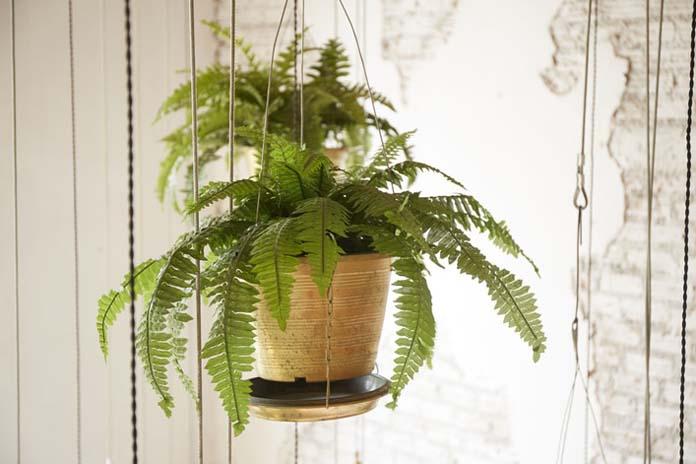 DIY Suporte para plantas