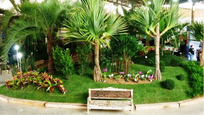 Plantas ornamentais para um jardim