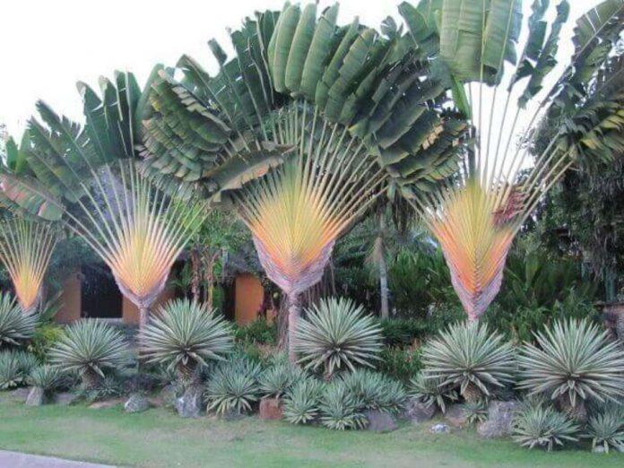 Plantas ornamentais para uma linda decoração de jardim