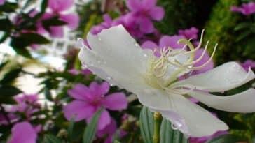 Plantas na decoração da casa: Uma tendência que veio pra ficar