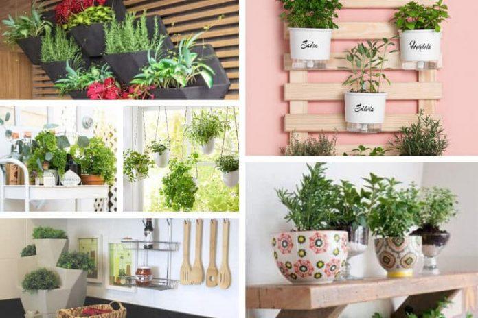 Plantas decorativas para sua cozinha