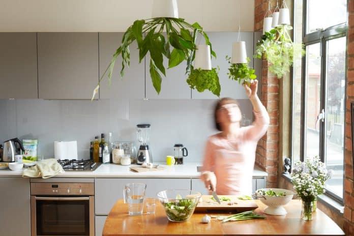 vasos de planta para sua cozinha