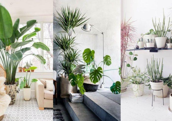 plantas pra se colocar e mudar a decoração