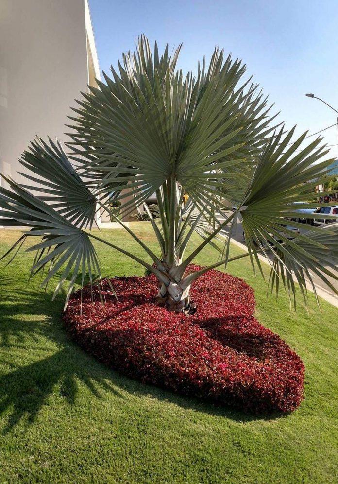 a palmeira foi valorizada com a figura de um coração construído por pequenas plantinhas vermelhas (iresines vermelhos)