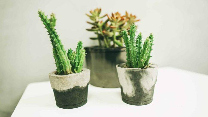 Vasos de Plantas: Modelos Criativos e Dicas de Como Escolher e Como Fazer