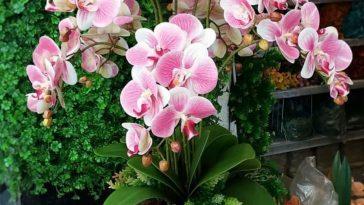 Como utilizar orquídeas na decoração de casa
