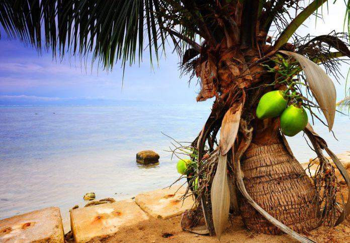 Coqueiro Anão: Como Cuidar, Dicas para Plantar e Cultivar no seu Jardim