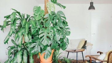 Plantas para Dentro de Casa: 10 Espécies Incríveis