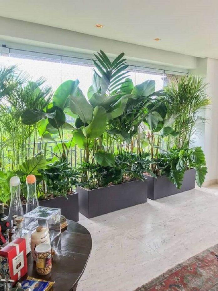 Plantas para Varanda: Conheça as Espécies Dicas de Decoração