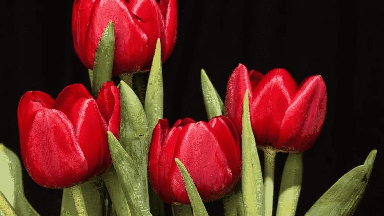 Arranjos de Flores Artificiais e Dicas de Como Fazer em Casa
